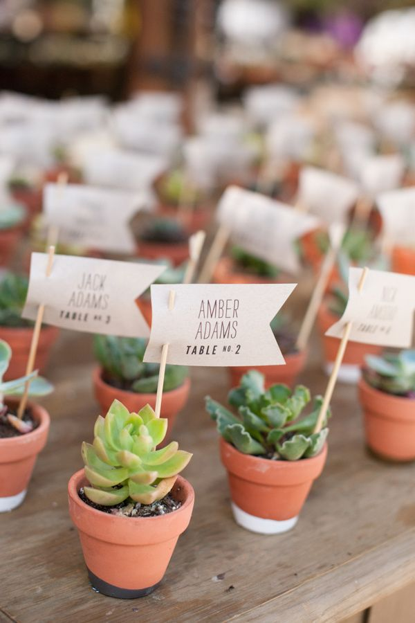 potted succulents as escort cards and wedding favors