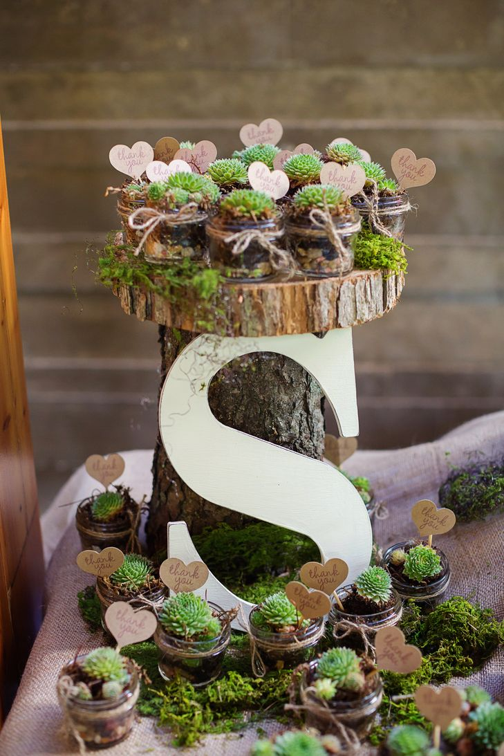 potted succulent  rustic wedding favors