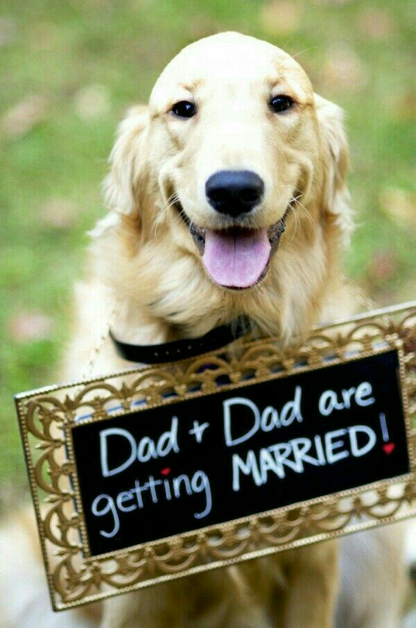 Clever Wedding Sign Ideas with Your Dogs