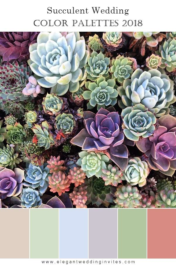 Unique Succulents Wedding Ideas & Trends for 2018