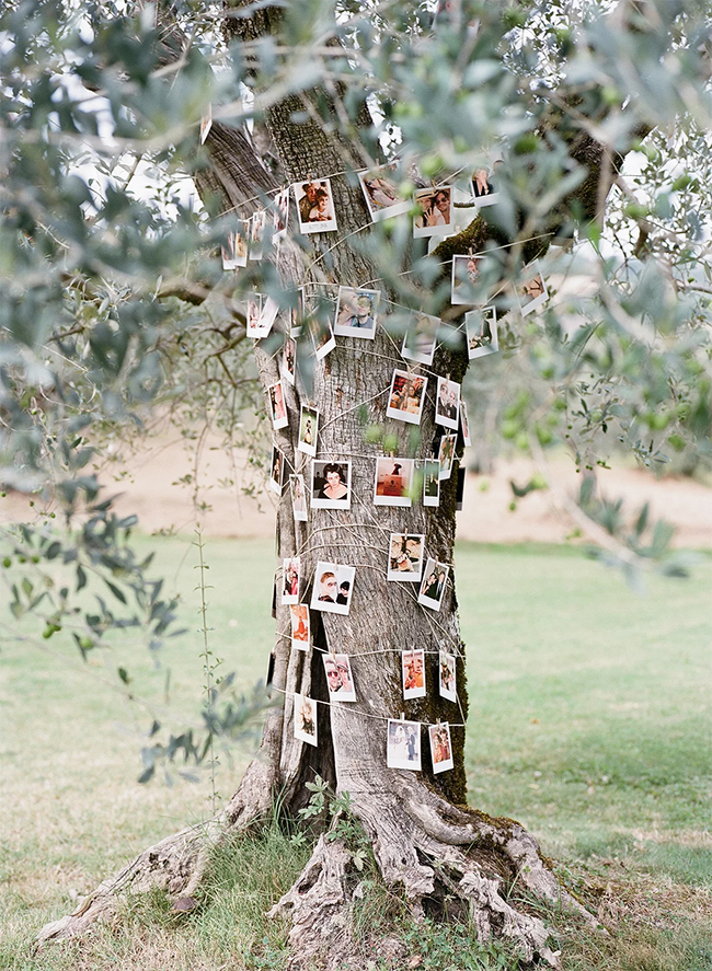 lovely wedding photo display family tree ideas